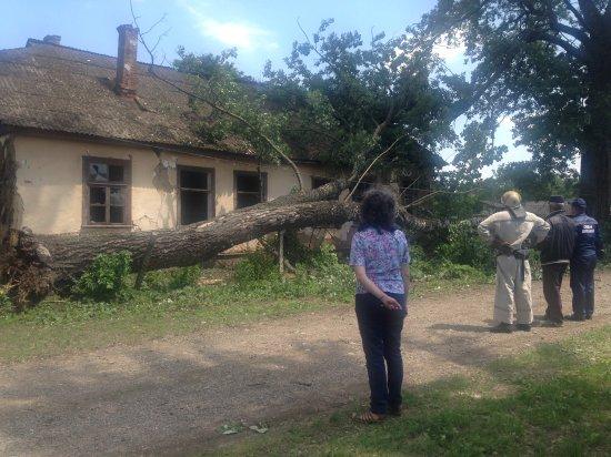 Сильний вітер пошкодив будівлі  і повалив дерева в Неполоківцях