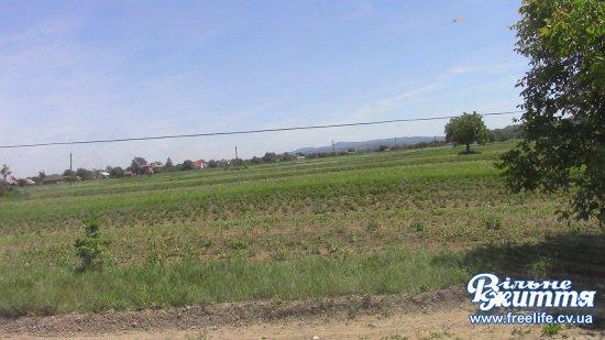 Де взяти землю для учасників АТО Кіцманського району (ВІДЕО)
