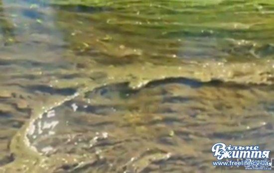 Екологи визначали, що спричинило забруднення Совиці в Мамаївцях
