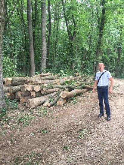 Поки засідала комісія по Кіцманському лісу, дерева продовжували рубати