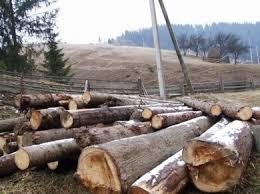 ДП «Чернівецьке лісове господарство» України сплатить майже 3 млн.грн. за шкоду, заподіяну навколишньому природному середовищу