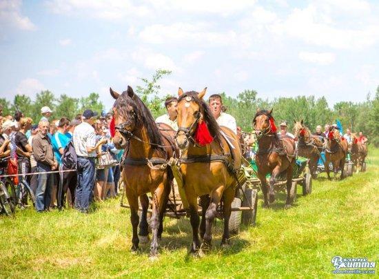 Фестиваль «Коні мої, коні» відбудеться в Стрілецькому Куті