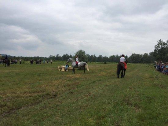 У Стрілецькому Куті відбувся фестиваль «Коні мої, коні»