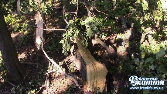 Повторний огляд ділянки Кіцманського лісу біля дороги провели з представниками громадськості (ВІДЕО)
