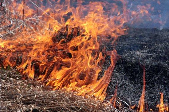 Спалювання трави та листя не лише шкодить здоров'ю, а й може стати причиною пожежі
