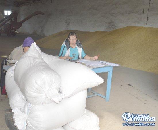 Жнива на Кіцманщині ще не завершились, а пайовикам уже дають зерно