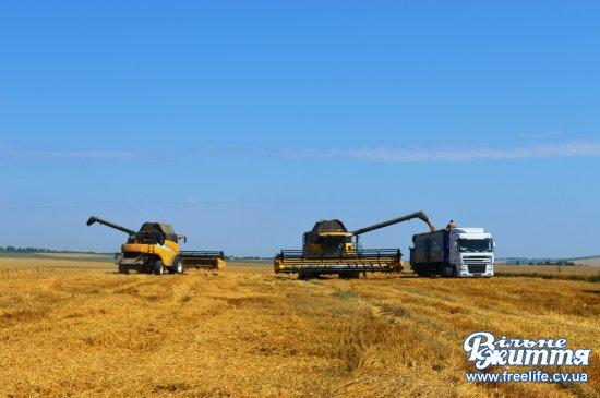 У Кіцманському районі — найвища урожайність ранніх зернових культур в області