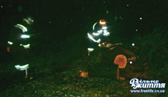 За півгодини на Кіцманщині буревій повалив дерева і ускладнив рух транспорту