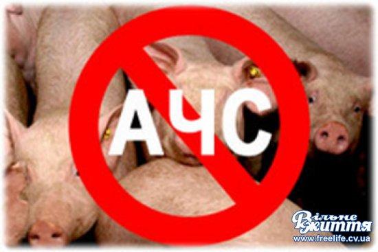 Африканська чума свиней — хвороба, що завдає значних економічних збитків