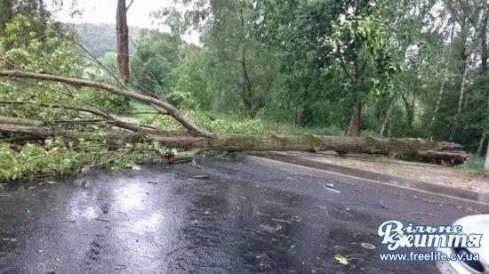 НаКіцманщині ураган повалив дерева і призвів до аварійних відключень електроенергії