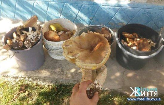 Люди масово збирають гриби, їх цієї осені вдосталь
