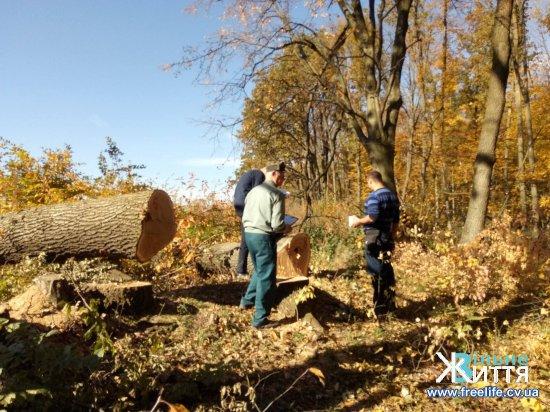 Представники громадськості продовжують захищати Кіцманський ліс
