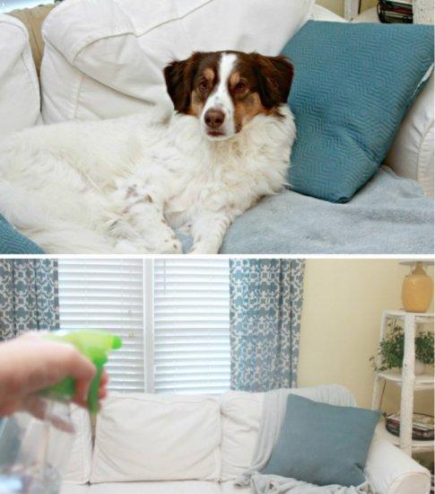 pet wearable device