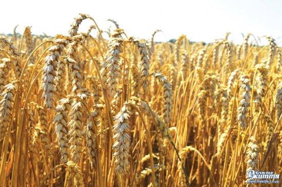 На Кіцманщині виробляється більше половини сільськогосподарської продукції всієї області