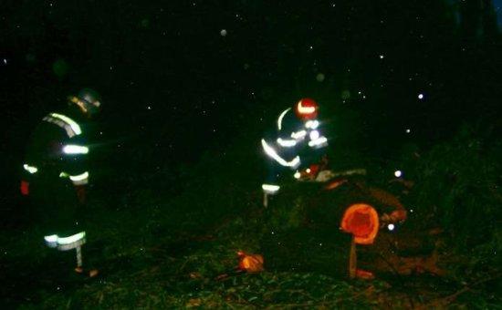 Поблизу Шипинців дерево впало на машину: водій отримав травми