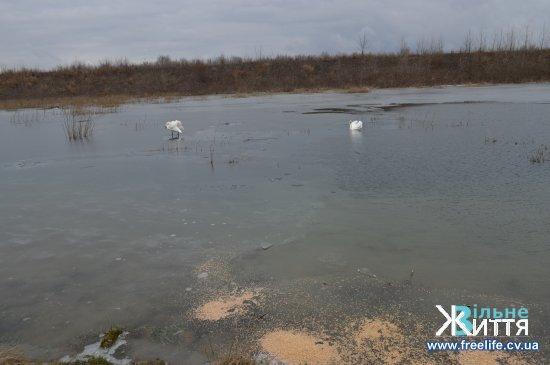 У Чорторию прилітають лебеді, але озера замерзають