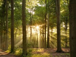 В лісових масивах ДП «Кіцманський ліс АПК» розпочався «сезон тиші»