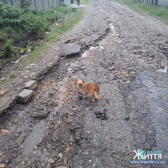 Наслідки негоди на Кіцманщині: розмило дороги, прорвало ставки, пошкодило лінії електропередач