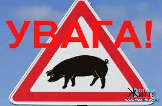Остерігаймося африканської чуми свиней