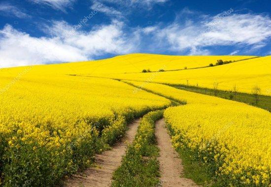 На Кіцманщині завдяки прокуратурі з незаконного користування повернуто майже 52 га землі загальною вартістю близько 15 млн грн