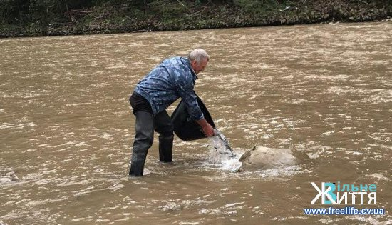 У річки Буковини випустили мальок лососі і форелі