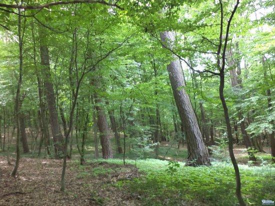 На Кіцманщині незаконно зрубали дерев на суму 1,2 млн.грн