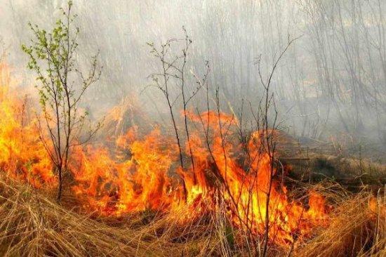 У Шипинцях через спалювання трави загорілося кладовище