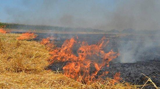 Пів гектара сухої трави згоріло у Кліводині