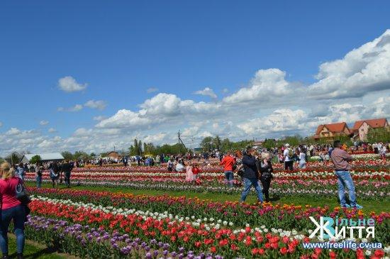 На фестиваль тюльпанів у Мамаївцях прийшли тисячі людей