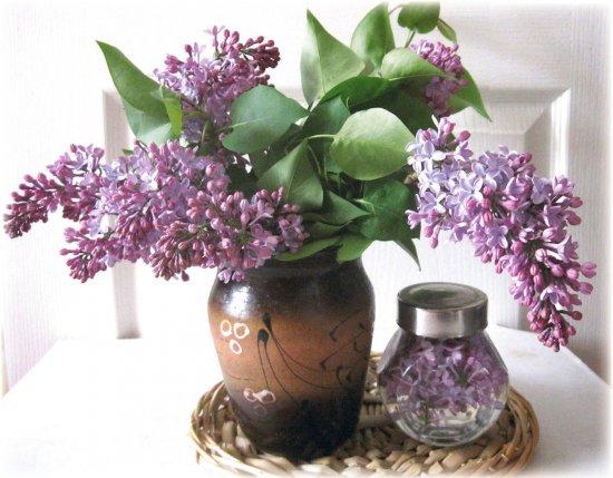 Бузковий цвіт – безцінний лікувальний засіб. Встигніть запастись, не пропустіть пік цвітіння