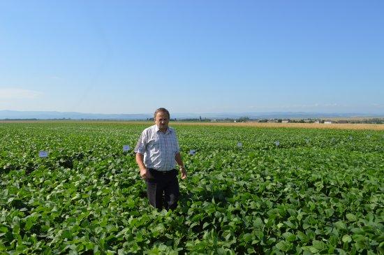 В Ошихлібах за 71 рік роботи центру експертизи випробували понад 25 тисяч сортів рослин